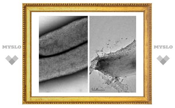 Ученые предложили засеять поля бактериями для получения спирта