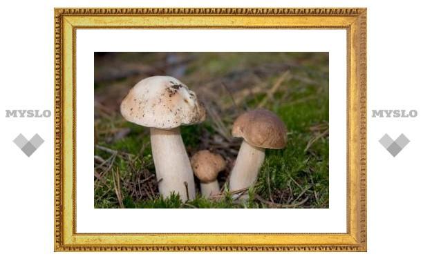 Трое туляков отравились белыми грибами