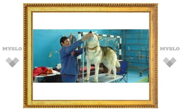 В Тулу прибыли собаководы всей страны