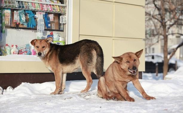 В Тульской области неизвестные истребляют бездомных собак
