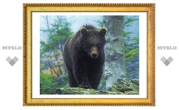 Тульский медведь задрал московскую семью