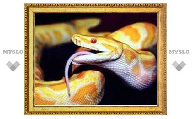 Тульский экзотариум приглашает совершить путешествие по миру змей