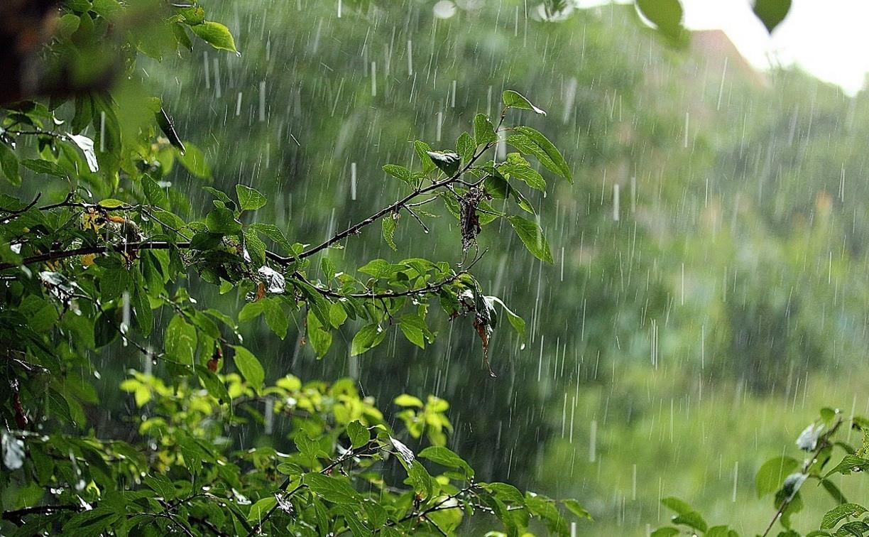 Погода в Туле 20 мая: облачно, дождливо и ветрено