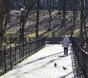 В Туле пенсионерка попалась на краже туй в Платоновском парке