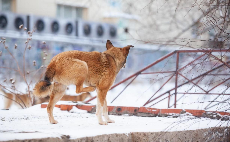 Дюмин дал главе администрации Новомосковска неделю на решение проблемы бездомных собак