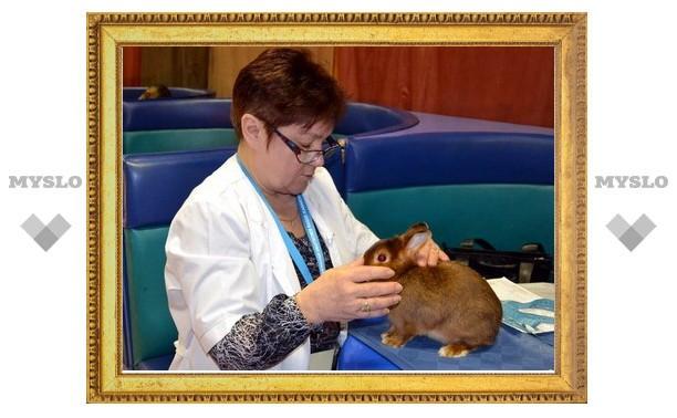 В Туле выбрали лучшего кролика