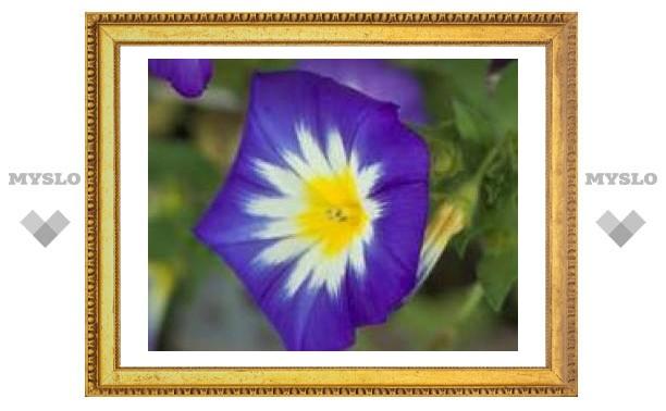 Весной в Туле посадят 1,5 миллиона цветов