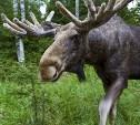 Полиция области устраивает рейды против браконьеров