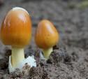 В июне в Тульской области четыре человека отравились грибами