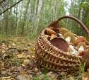 В Тульской области женщина ушла за грибами и пропала