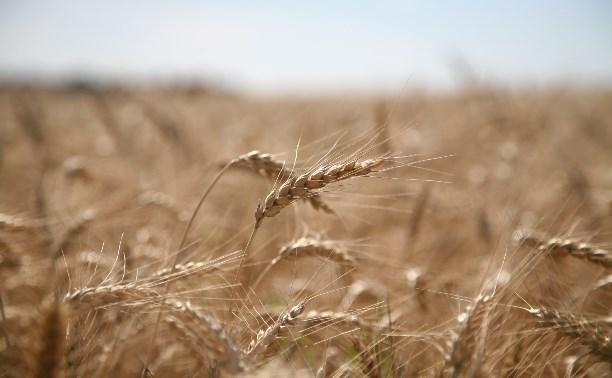 Алексей Дюмин: «Надо возрождать землю»