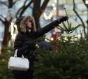 В Туле пройдет аукцион на заготовку елей к Новому году