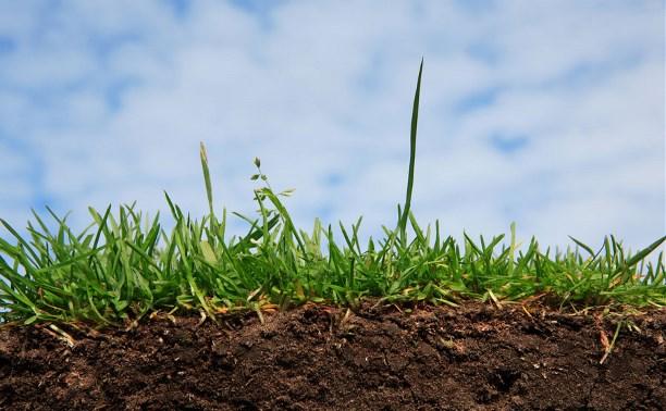 Руководитель фермерского хозяйства пожаловался Алексею Дюмину на отказ в аренде земли