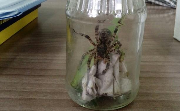 Туляк нашел тарантула в стиральном порошке
