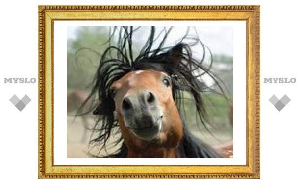 28 ноября: коли кони ржут, то это к добру