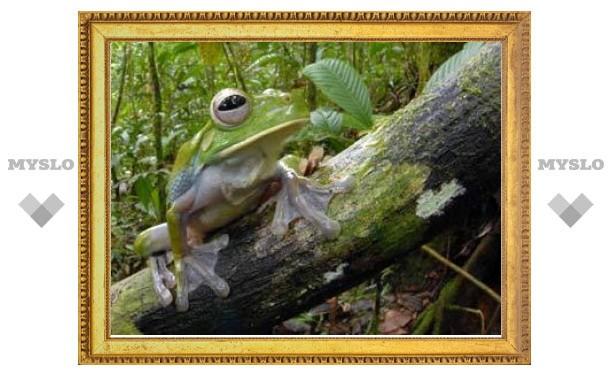 В Папуа - Новой Гвинее нашли неведомых лягушек и кузнечиков