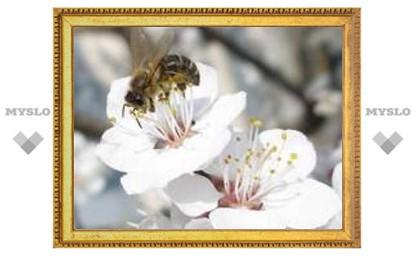 Выходные в Туле: весна в разгаре!