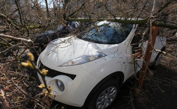В Туле ураганный ветер повалил деревья и столбы на автомобили