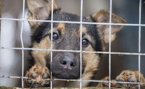 В Госдуме предложили ввести административную ответственность за жестокое обращение с животными