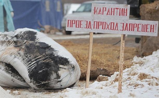 Россельхознадзор: Чуму в «Лазаревское» занесли местные жители-свиноводы