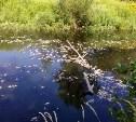 В реке Воронке отравили рыбу?