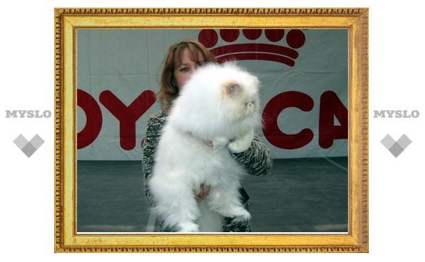 В Тулу приедут самые красивые кошки