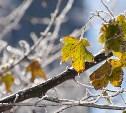 Погода в Туле 15 ноября: переменная облачность, до +3 градусов, без осадков
