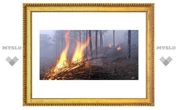 Под Тулой выгорел лес