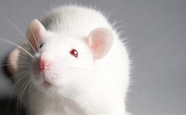 В Госдуму внесли законопроект о запрете тестирования косметики на животных
