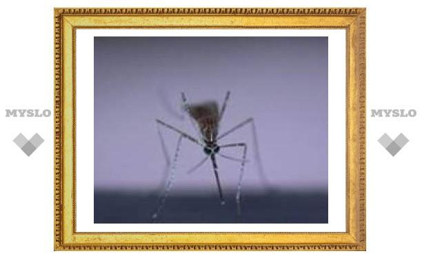 В Латинской Америке свирепствует лихорадка денге
