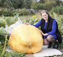 Туляки вырастили гигантские тыквы. Самая большая – на 165 кг!