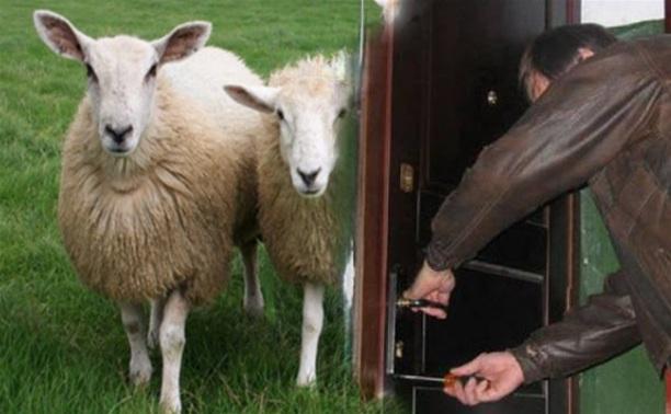 Тульская полиция раскрыла кражу из квартиры и хищение двух овец