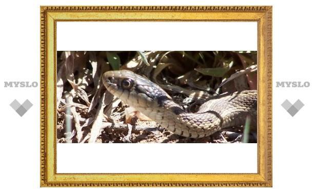 Туляков научат кормить змей