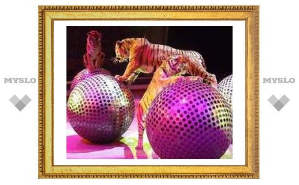 Где в Туле найти тигров и пантер?