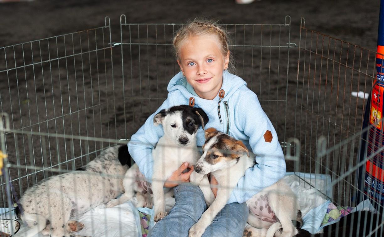 В Туле на благотворительном фестивале помощи животным собаки обрели хозяев: фоторепортаж