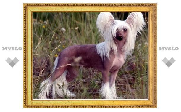 В Туле нашли щенка