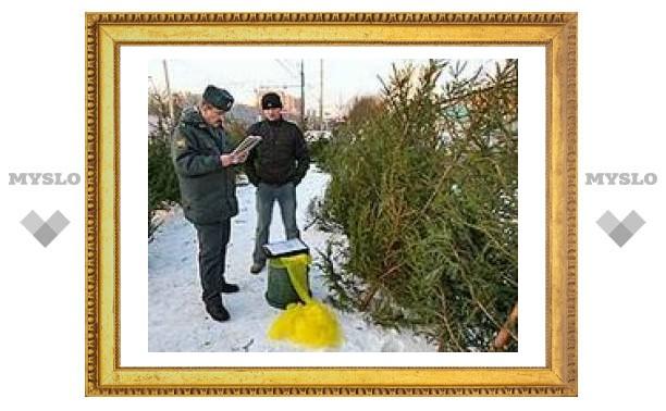 Под Тулой незаконно вырубают елки