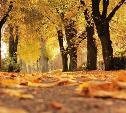 Погода в Туле 4 октября: сухо и до +22ºС