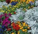 Улицы Тулы украсят необычные цветочные композиции