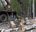 Администрация Тулы проверит информацию об «уничтожении берёзовой рощи»