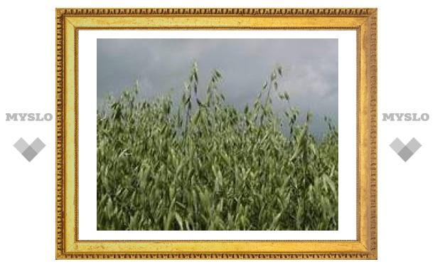 7 мая: Пришел Евсей - овсы отсей