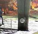 Поджигатели авто на Красноармейском проспекте попали на видео: нужна помощь очевидцев