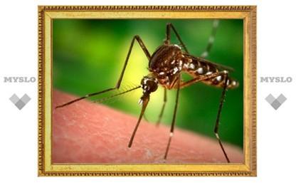 Тульские врачи предупреждают: остерегайтесь укусов подвальных комаров!