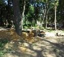 На месте срубленных деревьев в Рогожинском парке появится парковка