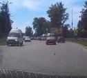 Под Тулой автомобилист спас котенка от гибели на дороге: видео