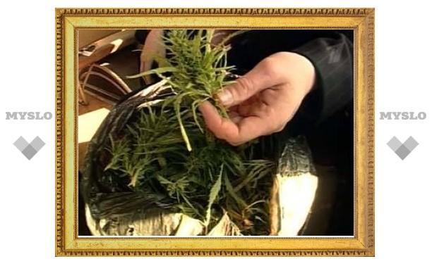 У петербургского каскадера изъяли марихуану