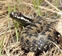 В экзотариуме организуют ликбез о ядовитых змеях