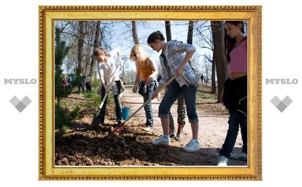 В Туле стало на 300 000 деревьев больше