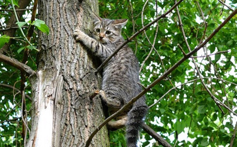 В Туле спасли кошку, сидевшую пять дней на дереве
