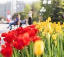 Погода в Туле 10 мая: жара и гроза